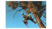 Спил деревьев,  санитарная обрезка деревьев