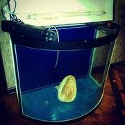 родается аквариум цилиндрической формы