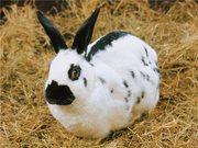 Кролики - Rabbits