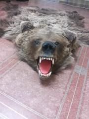 продам шкуру медведя