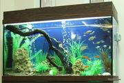 Специалист по обслуживанию аквариумов