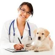 услуги ветеринара