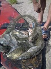 Рыбалка на реке Или
