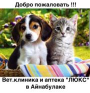 Ветеринарная клиника и аптека