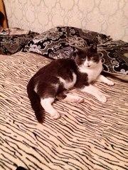 Красавиц кот Мэтт ищет достойную семью.