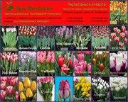тюльпаны на 8 марта оптом!