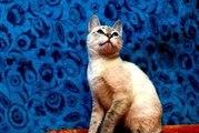 Кот Ластик в поисках дома с любящей семьей.