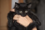 Котенок девочка бесплатно в добрые руки