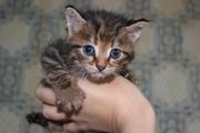 СРОЧНО! Красивые котята ищут дом и добрые руки!