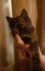 Котенок в хорошие руки (отдам в дар)