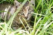 Котята от крысоловки в частный дом
