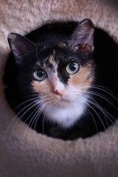Наша Умита - вполне обычная кошка,  но с замечательным характером.