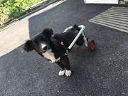 Изготовлю инвалидную коляску–тележку для собаки.