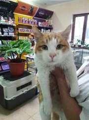 Котик Тиша хочет обрести дом