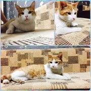 Котик Тиша ищет заботливых родителей.