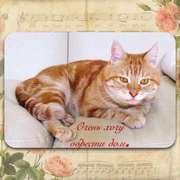 Ищем дом для замечательного рыжего мраморного Кота.