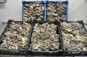 Организуем для Вас грибное производство