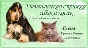 Стрижка кошек и собак.