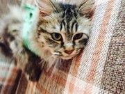 В поисках семьи кошечка Шанель(Шаня).