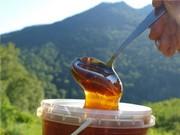 Продаем горный мед оптом в пригороде Алматы (Иссыке)
