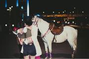 Аренда коня