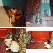 Симпатичные и умненькие котята ищут дом.