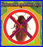 Уничтожение древесного жука короеда в Алматы и области.