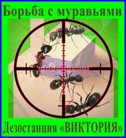 Как избавиться от муравьёв - услуги Уничтожение муравьёв в Алматы