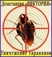 Как избавиться от тараканов в Алматы услуги - Уничтожение тараканов