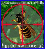 Как избавиться от ос в Алматы услуги - Уничтожение ос и осиных гнёзд