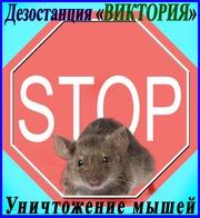 Как избавиться от мышей услуги - Уничтожение мышей  Борьба с мышами