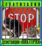 Дератизация - уничтожение грызунов в Алматы Дезостанция «ВИКТОРИЯ»