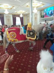 конь в Алматы