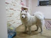 Гостиница для собак (зоогостиница,  передержка) happydogs