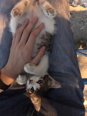 Отдадим котёнка (она)