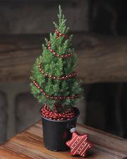 Подарочные елочки в горшках к Новому году!