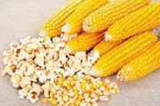 Продам рассаду кукурузы